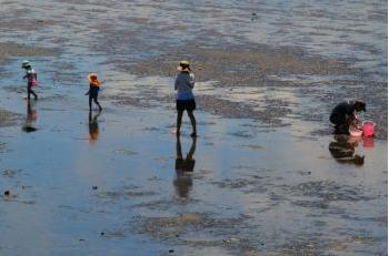 潮干狩り ハマグリ 時期
