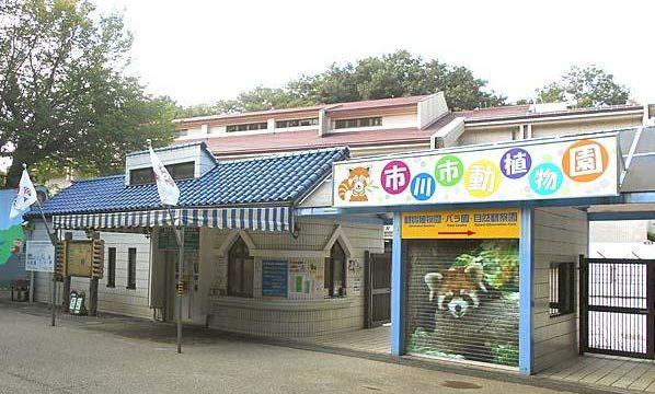市川市動植物園の流しカワウソ